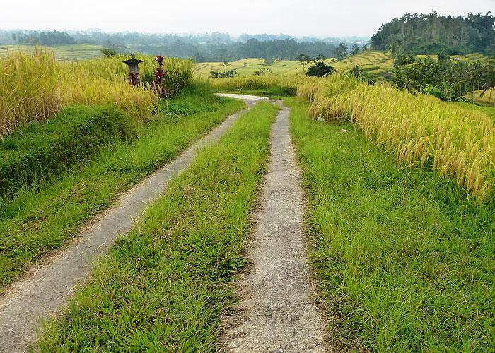 sang-giri-tents-jogging through rice fields