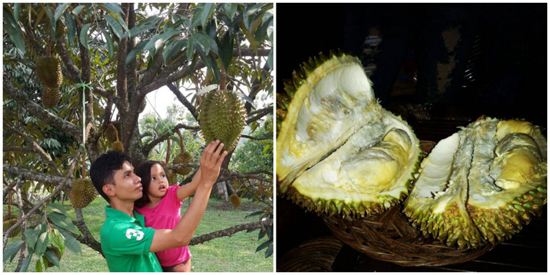 18-durian-via-aisahkamelia,-aldow82