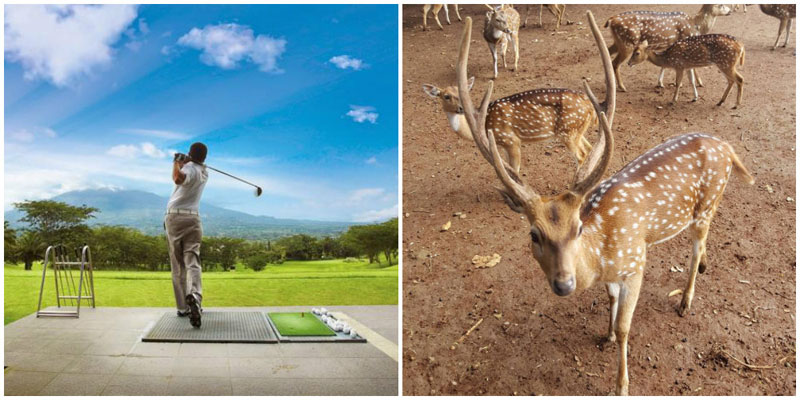 1c-deer-golf-via-minne