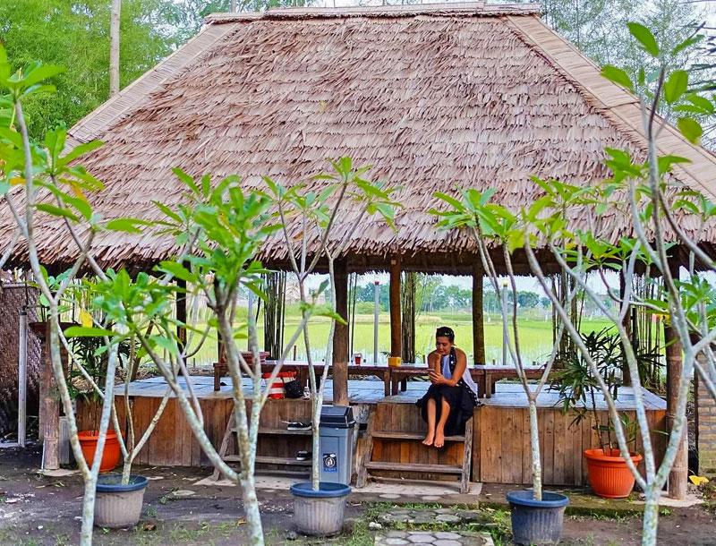 Disewakan properti di Yogyakarta - sawah pinggir jalan yogyakarta - Waa2