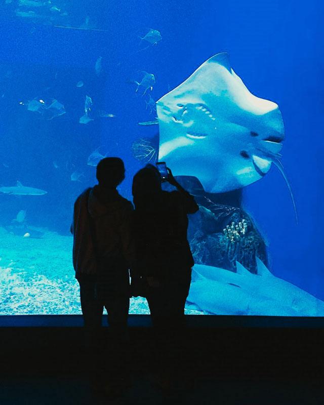 Neo Soho Aquarium: 15 Ide Liburan Dan Tempat Romantis Di Jakarta Agar