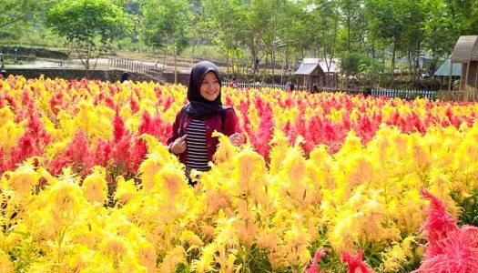 16 Tempat wisata berhawa sejuk di sekitar Semarang, Bandungan & Ungaran yang bikin hati tambah adem