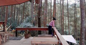 Glamping dan wisata alam HITS tengah hutan pinus di perbatasan Jogja - Purworejo - Deloano glamping