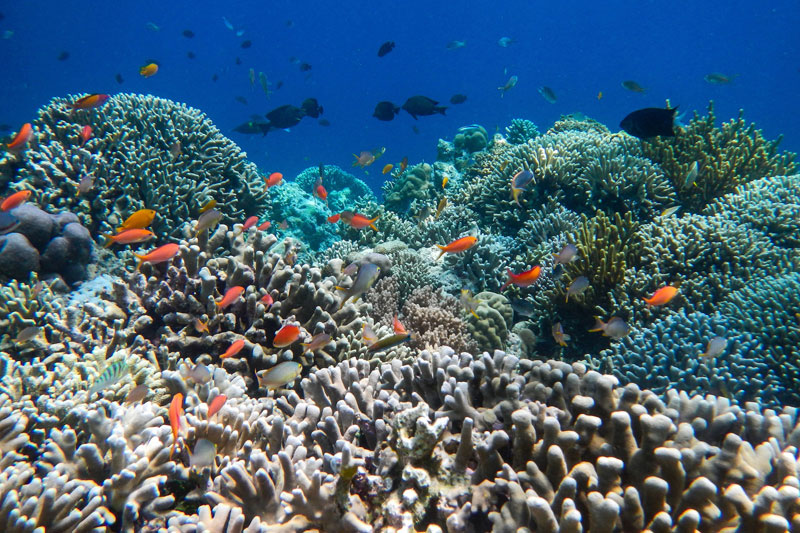2-b-Menjangan-Coral-Garden-by-Ferdi-de-Gier