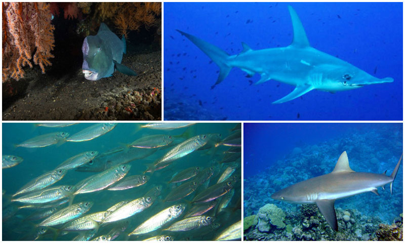 6-a-i.-Gili-Selang-by-NOAA,-liveaboardsafari,-Richard-Ling