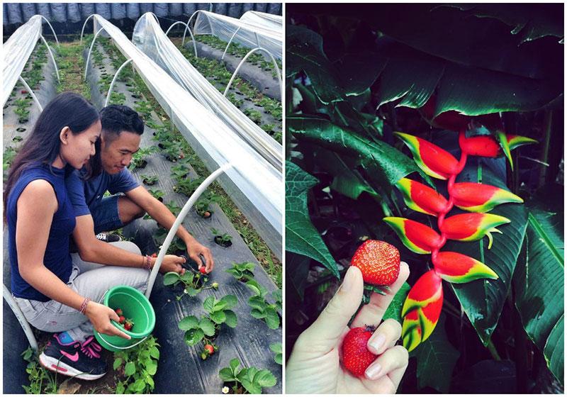 4-strawberry-via-yulia_pryimachuk,-rakawitraguna