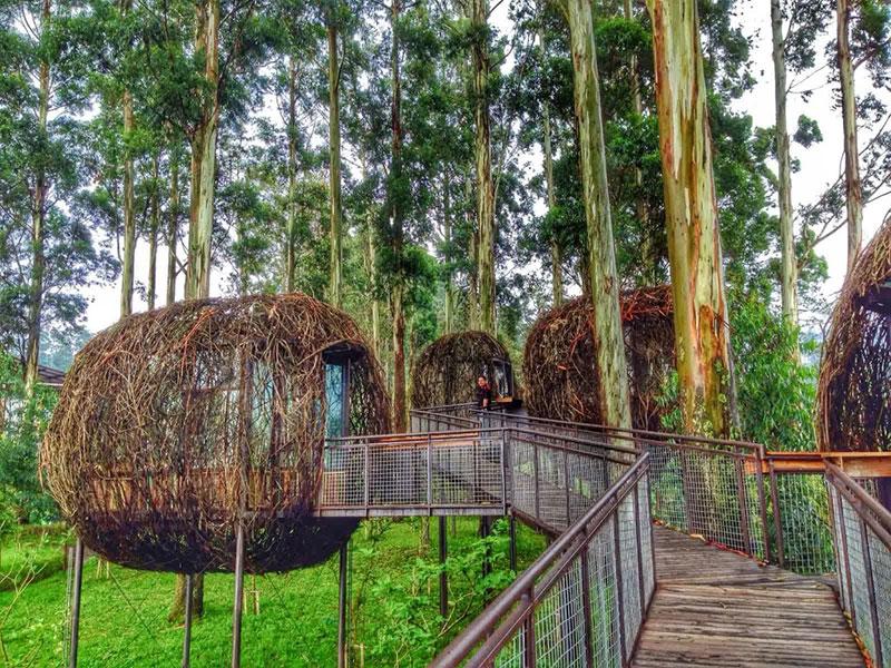 7-dusun-bambu-bird-nest