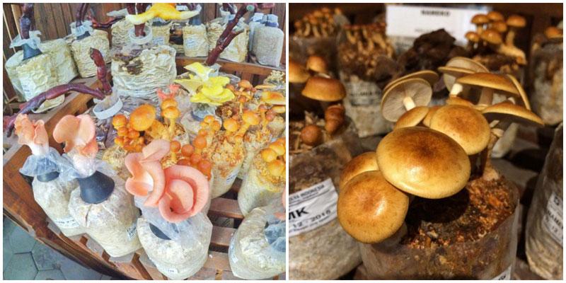 9-3-mushroom-via-nurwahyuuu,-asyihfriadiayani