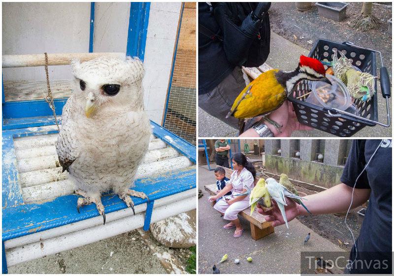 4-bird