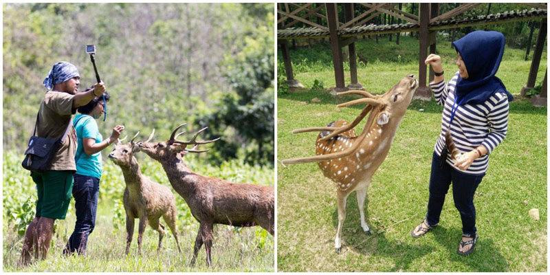 2-deer-via-dgoreinnamah,-riskahsana