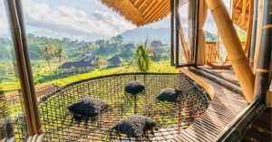 Veluvana Bali – Stay among nature at this Bali bamboo house with private pool!